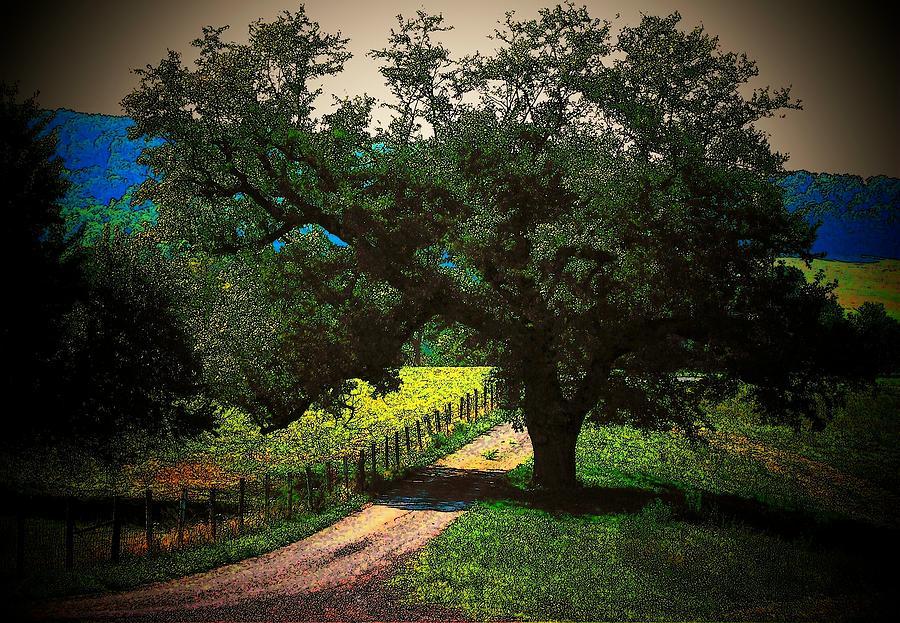 Trees Photograph - Down The Lane by Joyce Kimble Smith