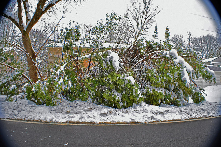 Snow Photograph - Down Trees by Joseph F Safin