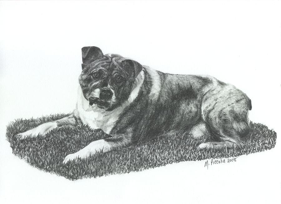 Dog Drawing - Dozer by Marlene Piccolin