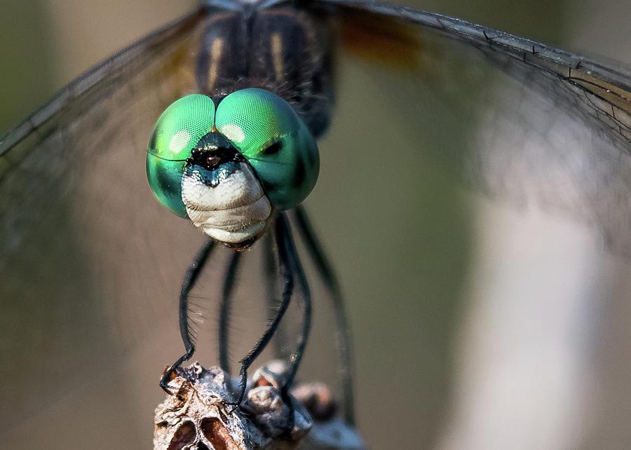 Florida Photograph - Dragon Face by Don Miller