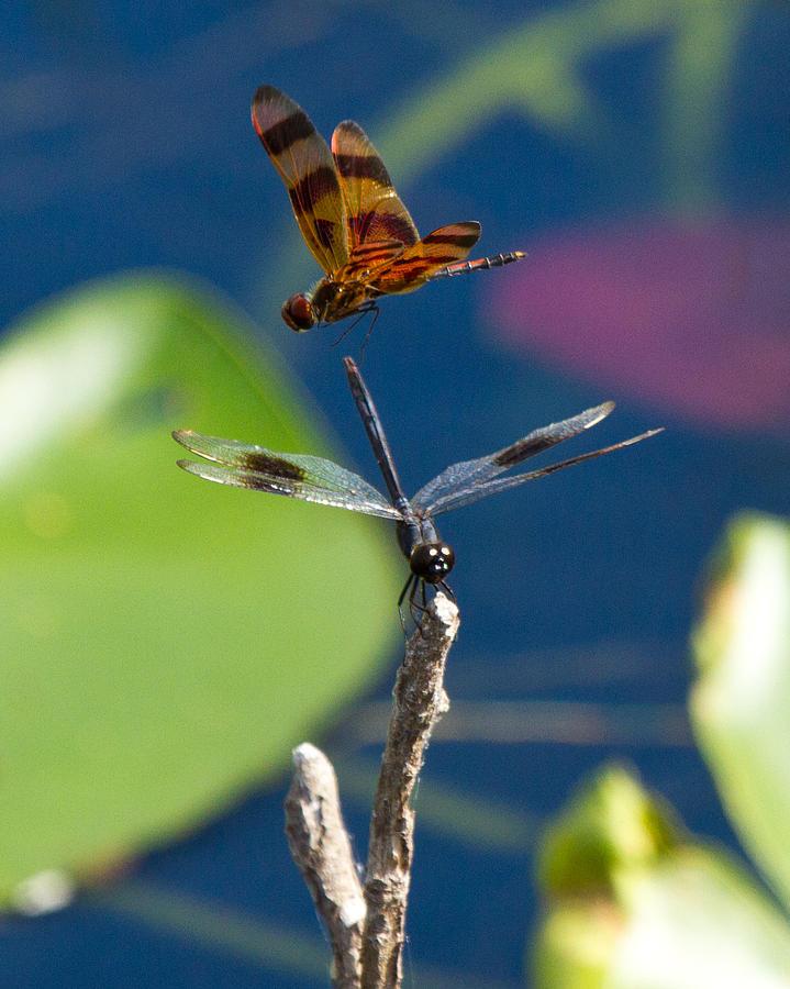 Dragon Fly 195 by Michael Fryd