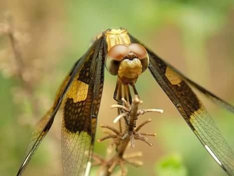 Beautiful Photograph - Dragon Fly by Samuel Olaniyan