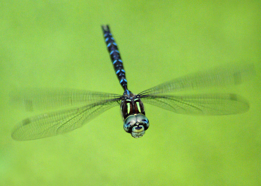 Dragonfly Photograph - Dragonfly #1 by Ben Upham III