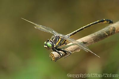 Dragonfly Photograph - Dragonfly After Clouds Parted by Mike Weber