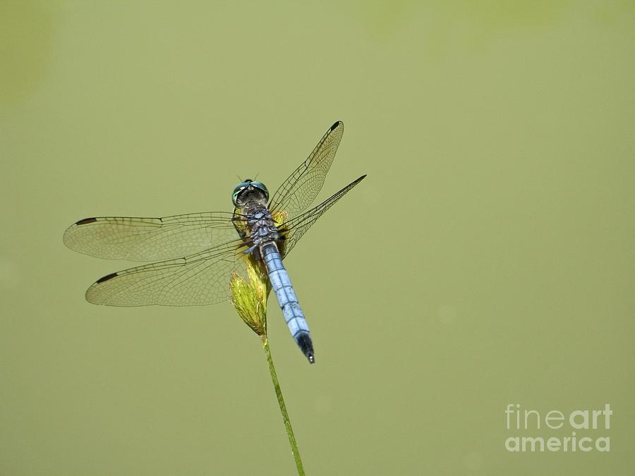 Dragonfly Photograph - Dragonfly by Andrew Kazmierski