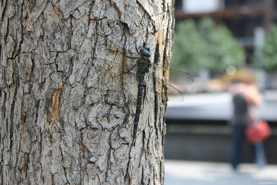 Dragonfly Photograph - Dragonfly At Ground Zero by Laura Martin