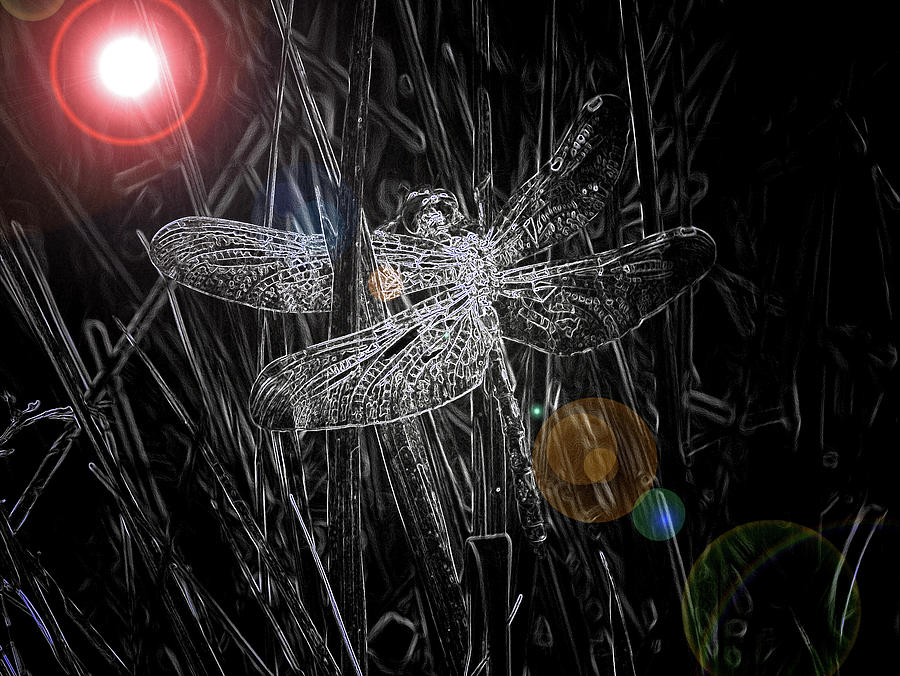 Dragonfly Digital Art by Bob Kemp