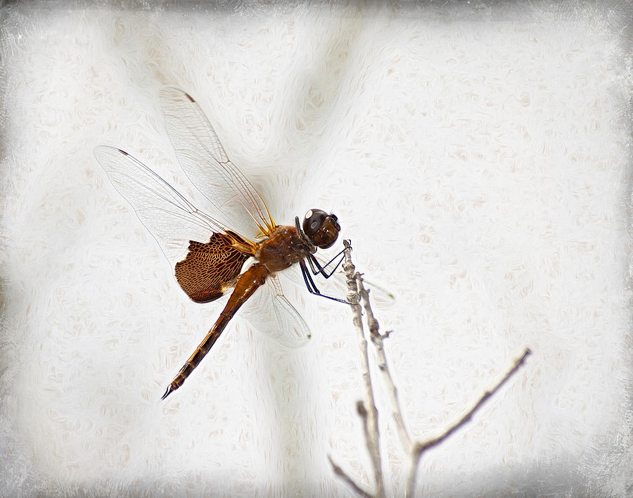 Dragonfly Photograph - Dragonfly by Carolyn Marshall