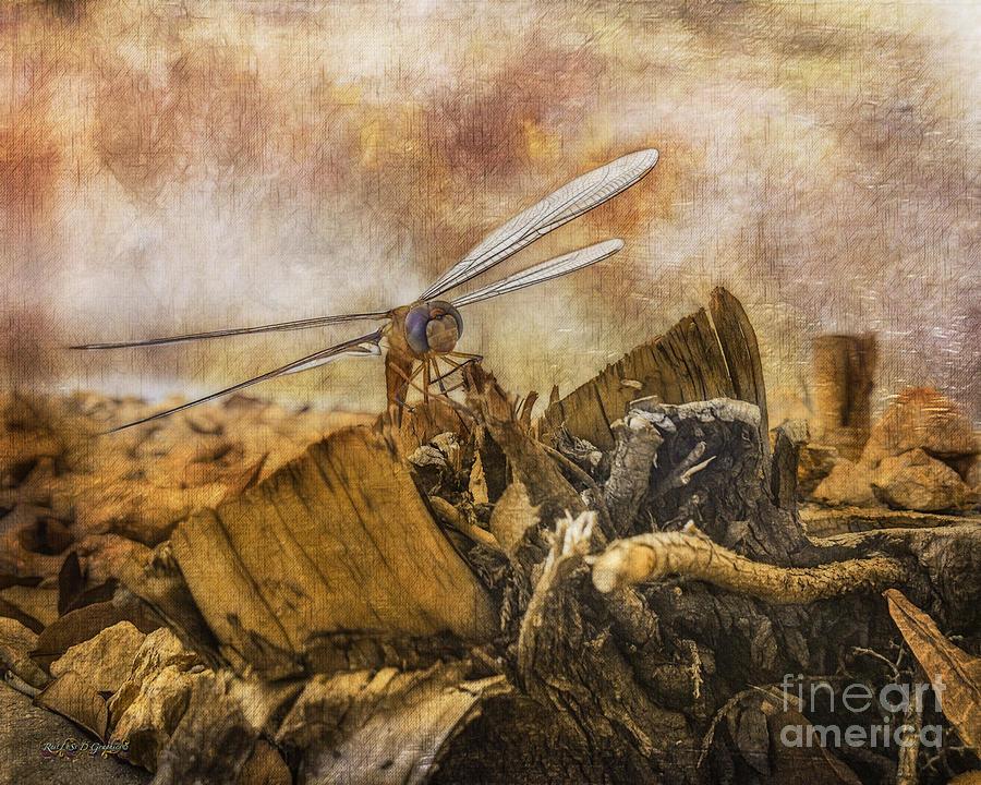 Dragonfly Dreams by Rhonda Strickland