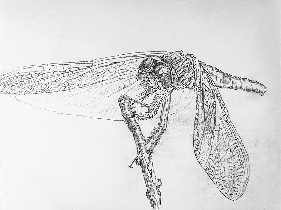 Dragonfly Drawing - Dragonfly by George Desire Herman