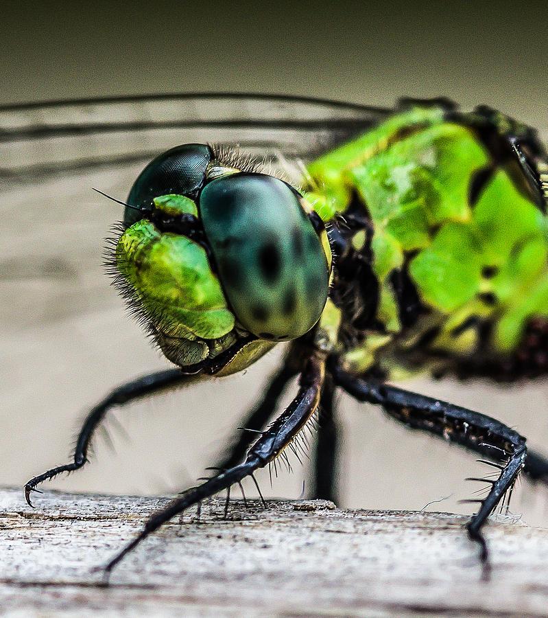 Dragonfly Head Shot by MaryAnn Barry