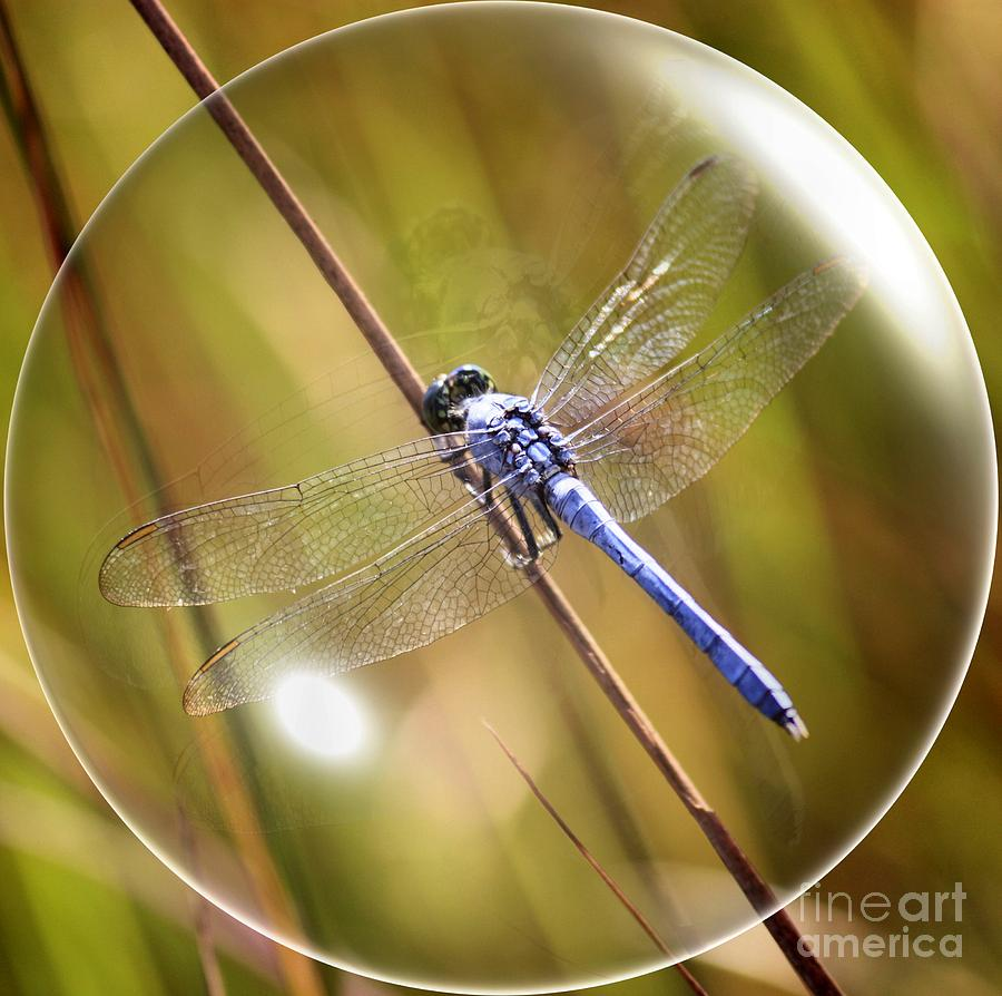 Dragonfly In A Bubble Photograph by Carol Groenen