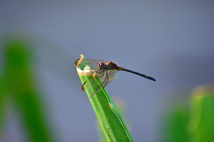 Dragonfly in Costa Rica by Richard Cheski