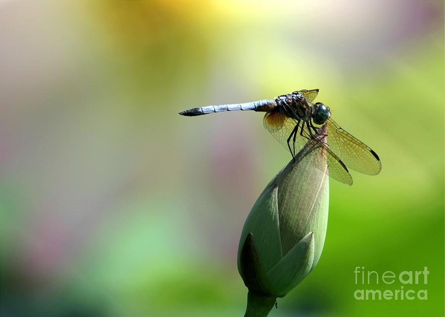 Dragonfly Photograph - Dragonfly In Wonderland by Sabrina L Ryan
