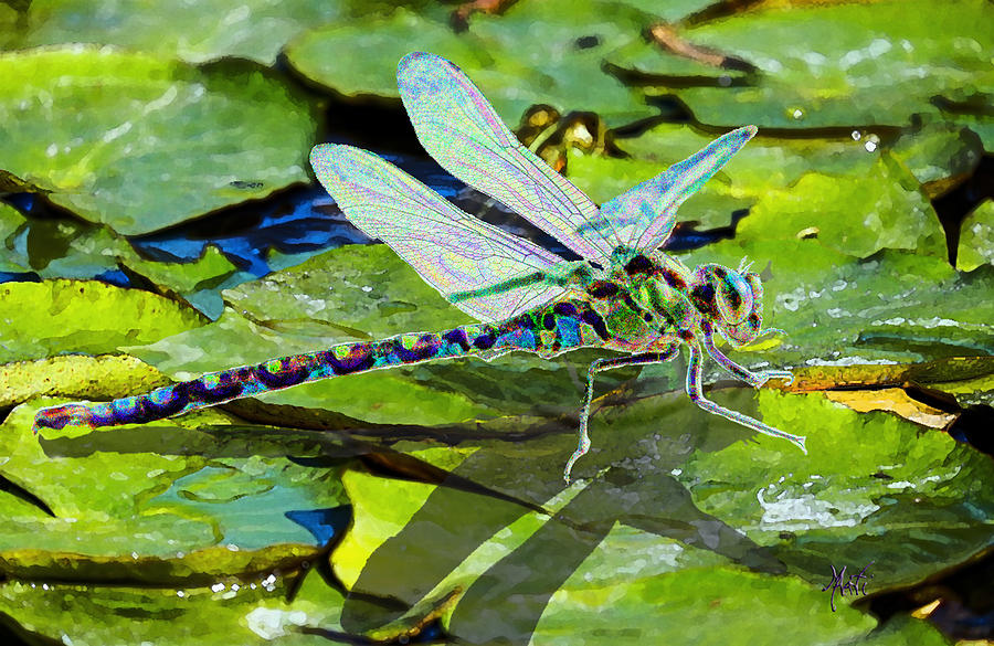 Dragonfly On Lilypad Mixed Media