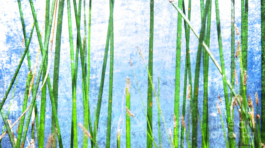 Water Photograph - Dragonfly On Reeds by Monica Carrell