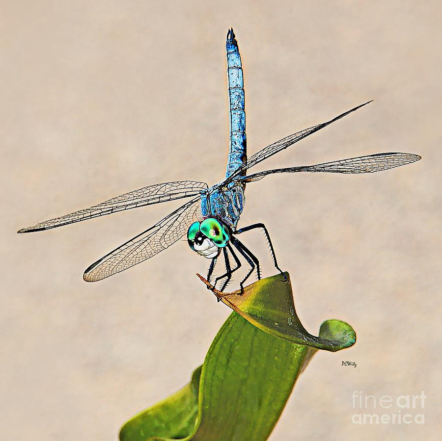 Dragonfly Photograph - Dragonfly by Patrick Witz