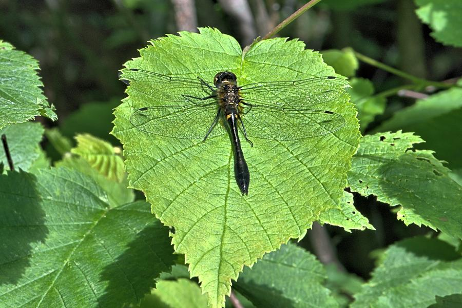Dragonfly Photograph - Dragonfly Resting by Andrew Miles