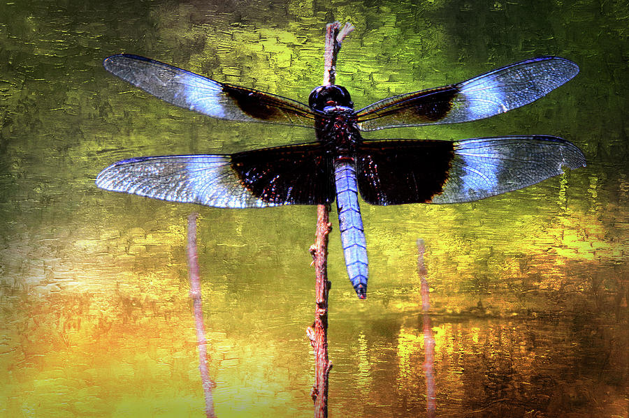 Dragonfly Photograph by Scott Fracasso
