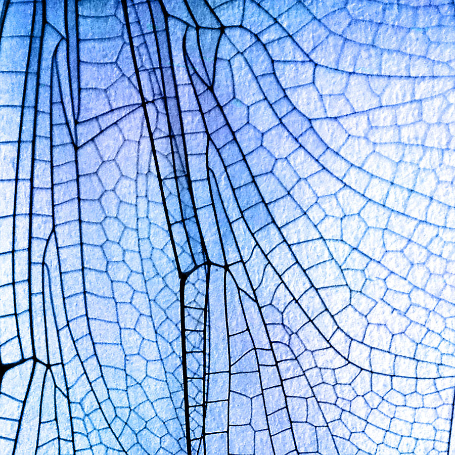 dragonfly wing blue photograph by kris sheather