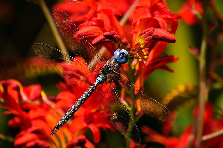 Dragonfly by Ken Foster