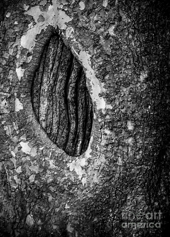 Tree Photograph - Dragons Eye In Black And White by James Aiken