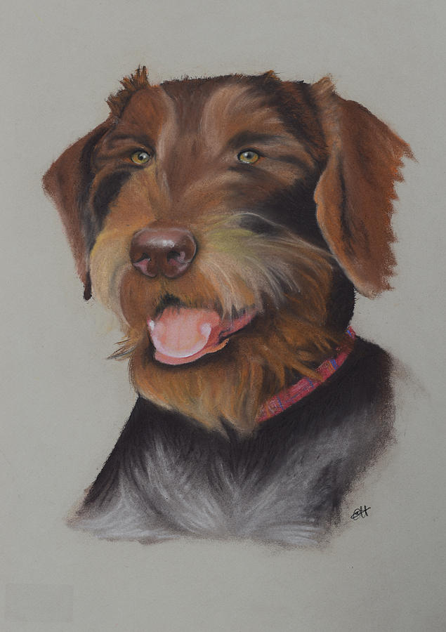 Drahthaar Painting - Drahthaar German Wire Haired Pointer by Catt Kyriacou