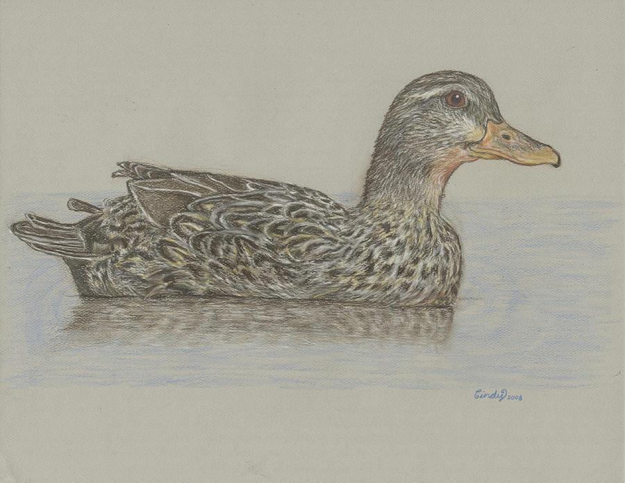 Drake Drawing - Drake Duck by Cynthia  Lanka