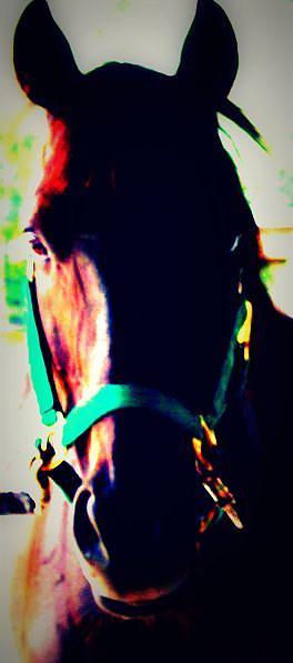 Horse Photograph - Drama by Jill Tennison