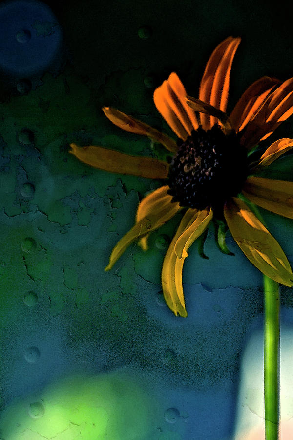 Echinacea Photograph - Drama Queen by Bonnie Bruno