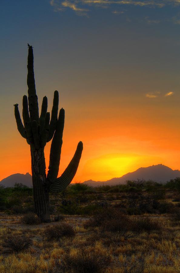 Dramatic Desert Morning Digital Art