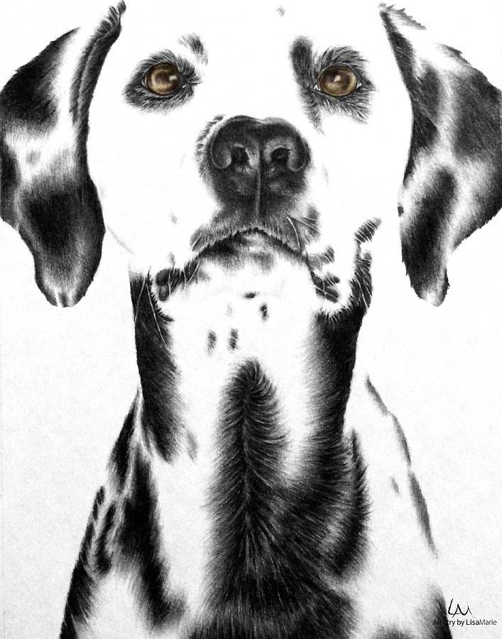 Dog Portrait Drawing - Drawing Of A Dalmatian Dog by Lisa Marie Szkolnik