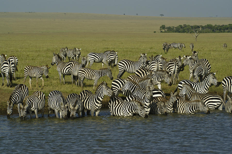 Africa Photograph - Drawn To Water by Michele Burgess