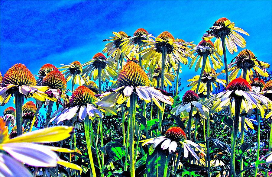 Flower Photograph - Dream Field by Gwyn Newcombe