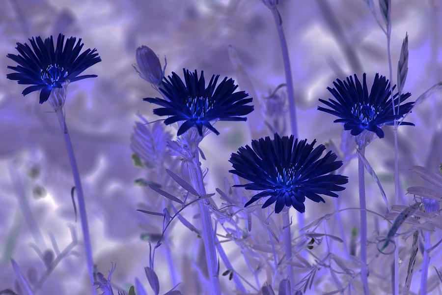 Nature Digital Art - Dream Fields by Tom Rickborn