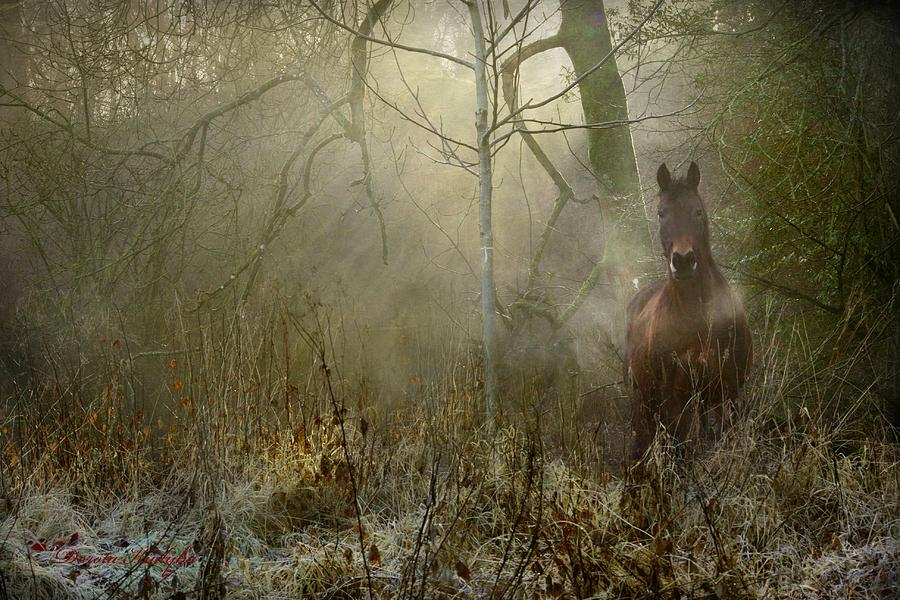 Horse Photograph - Dream Forest by Dorota Kudyba