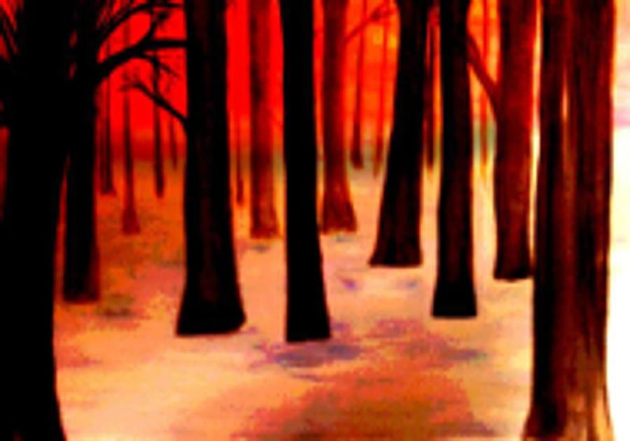 Trees Digital Art - Dream  Forest by Klaus Engels