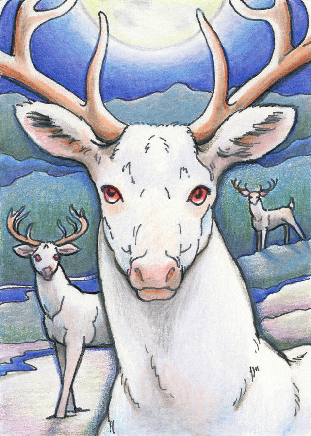 Atc Drawing - Dream Of The White Stag by Amy S Turner
