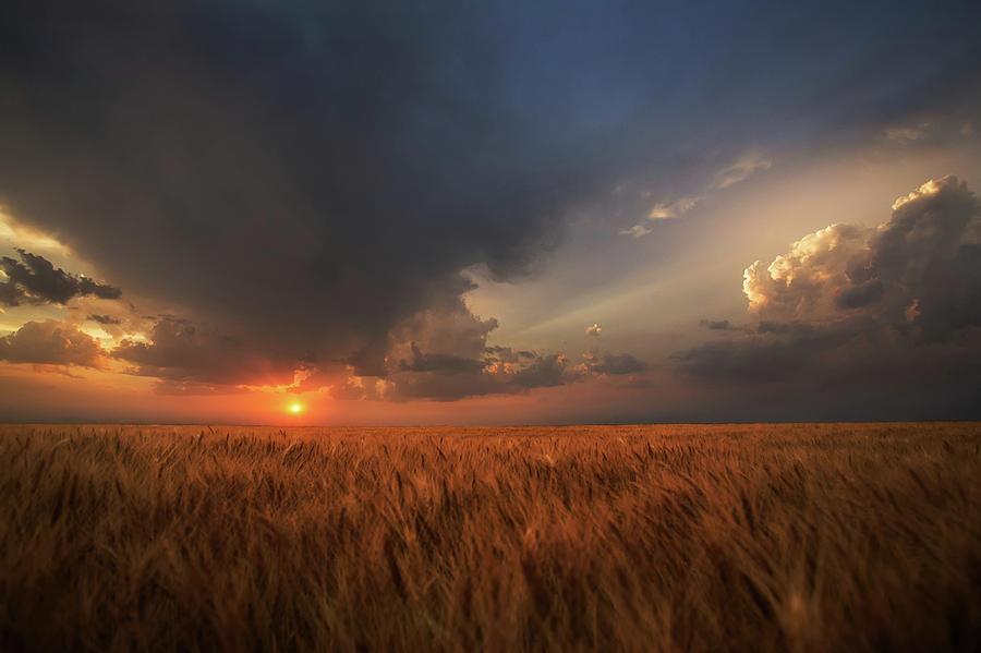 Wheat Photograph - Dreamcatcher by Thomas Zimmerman