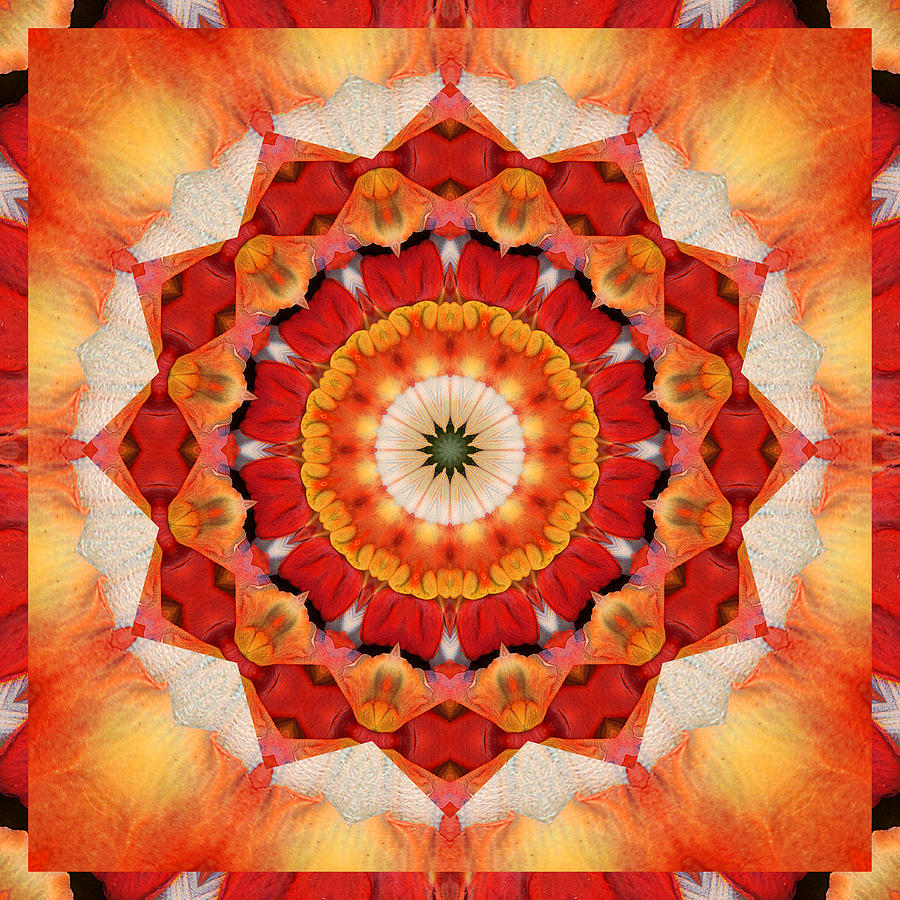 Mandalas Photograph - Dreaming by Bell And Todd