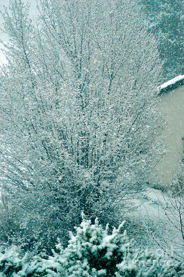 Dreaming Of A White Christmas - Winter In Switzerland Photograph