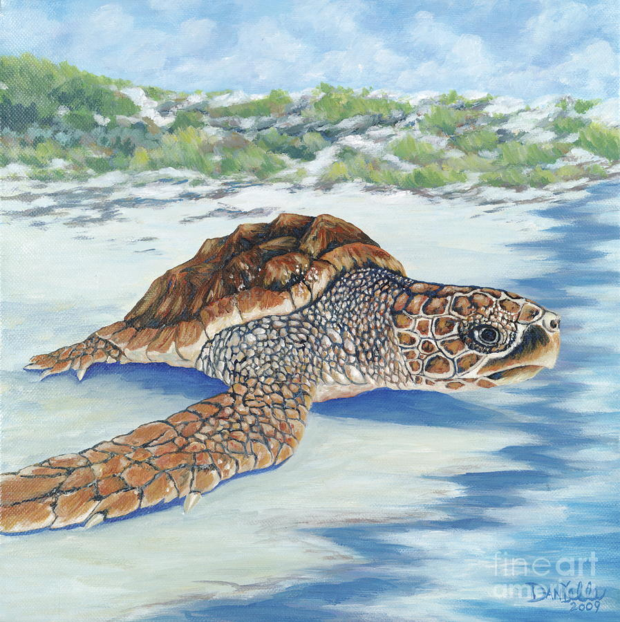 Sea Turtle Painting - Dreaming Of Islands by Danielle  Perry