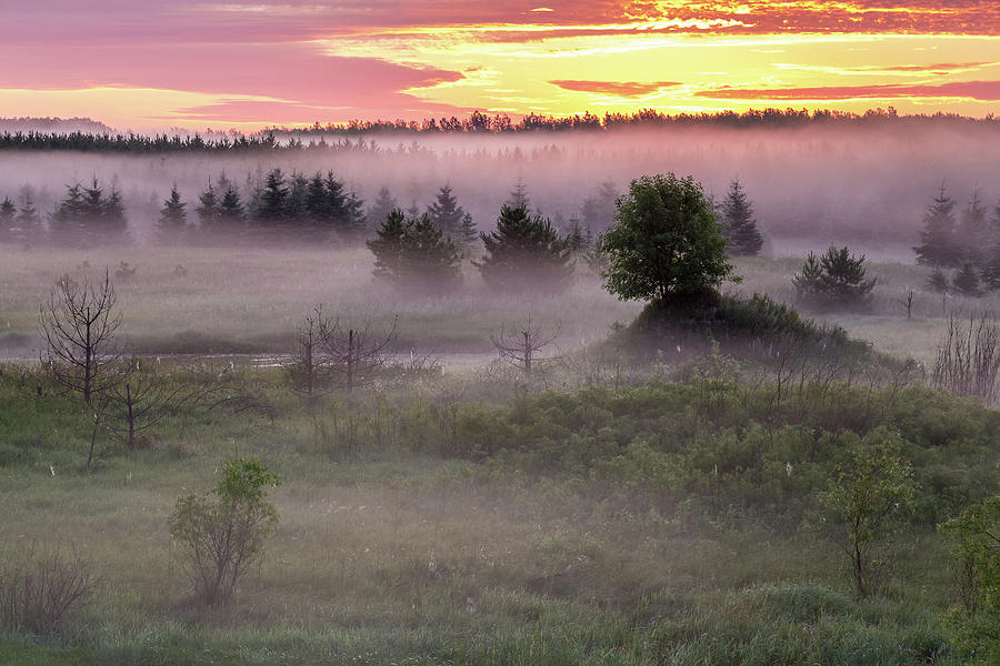 Morning Photograph - Dreamland by Penny Meyers