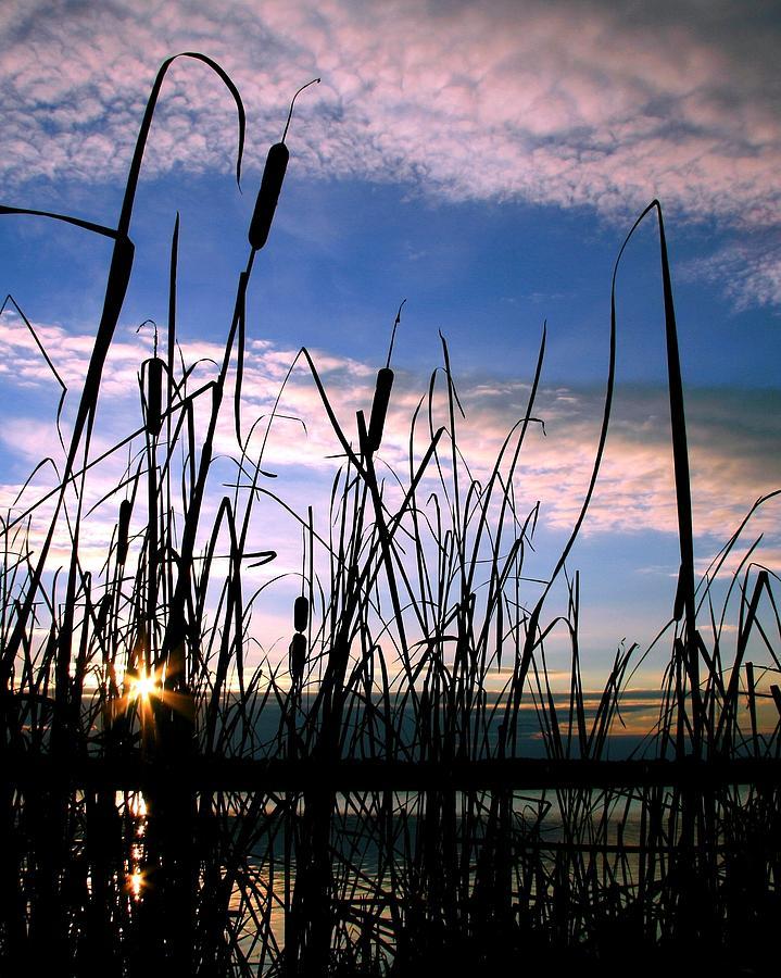 Landscape Photograph - Dreams by Mitch Cat