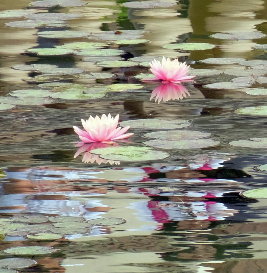Dreams of Monet by Rochelle Sjolseth
