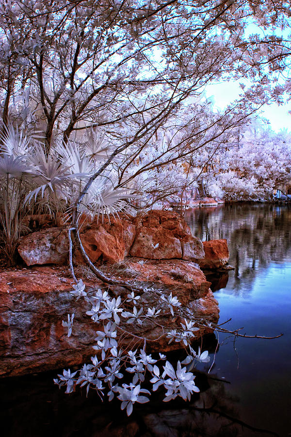 Infrared Photograph - Dreamscape by Edward Kreis