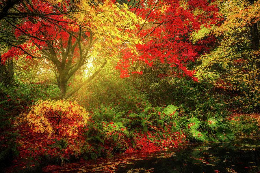 Dreamy Autumn by Mihai Andritoiu