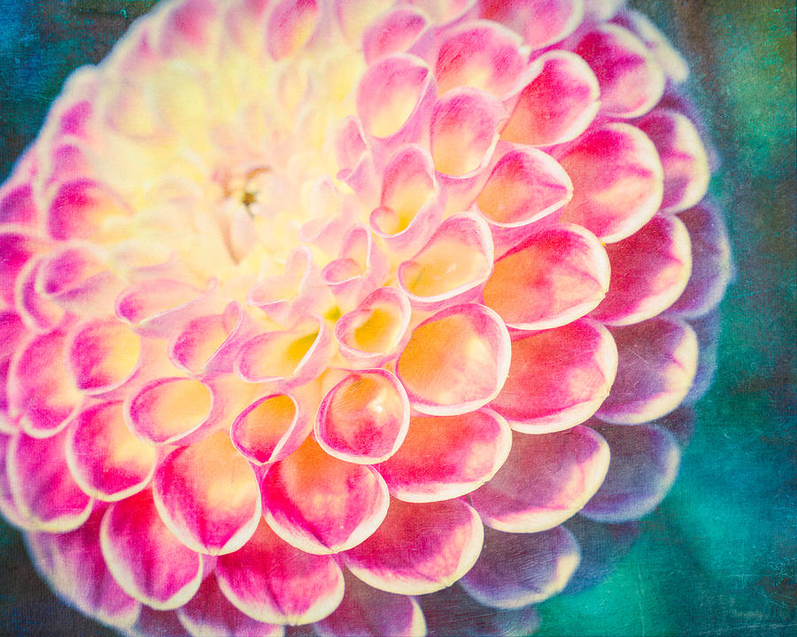 Dreamy Dahlia  by Priya Ghose