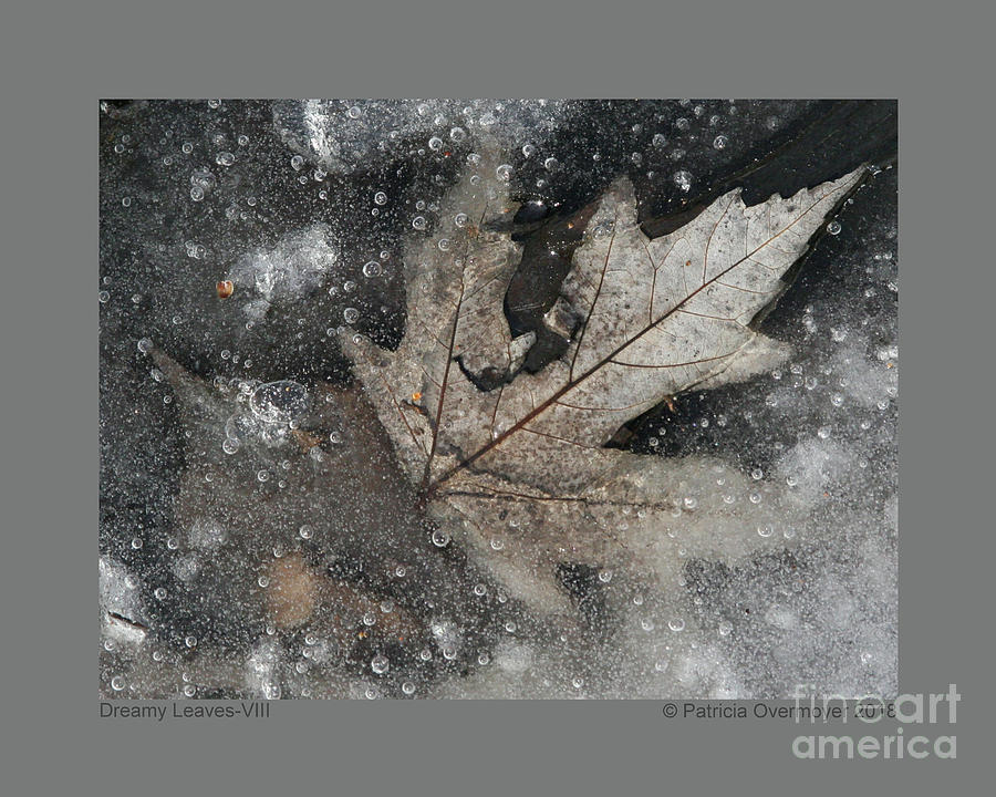 Dreamy Leaves-VIII by Patricia Overmoyer