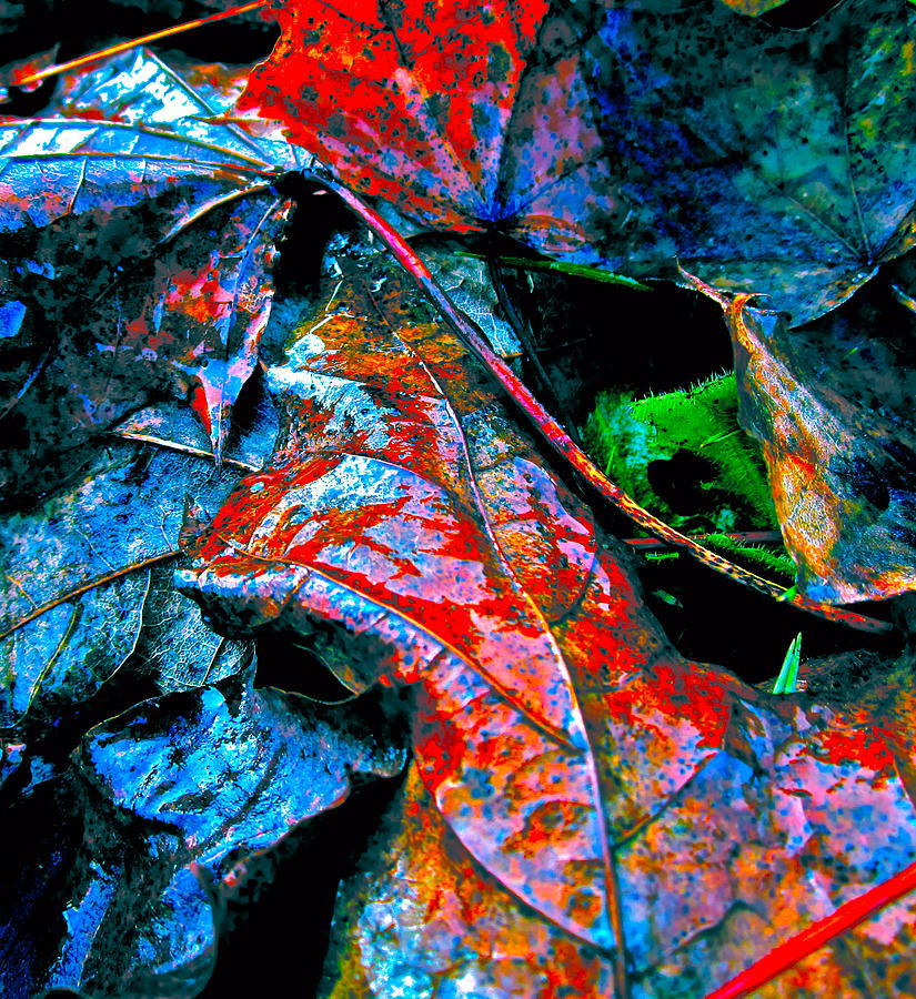 Leaf Photograph - Drenched In Color by Gwyn Newcombe